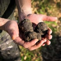 Food Tour of Istria motovun croatia cycling and truffle hunting - Terra Magica Croatia - bike tours istria