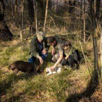 truffle hunting motovun istria croatia- Terra Magica Croatia - adventure holiday Croatia