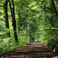 Hiking Istria - Terra Magica Croatia - croatia hiking tours
