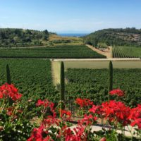 Winery in Istria Croatia - Terra Magica Croatia - adventure holiday Croatia