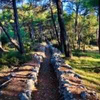 walking path through a coastal mediterranean forest near mali losinj croatia